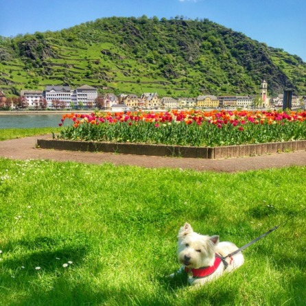 Charlie relaxing by the Rhine